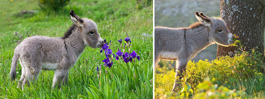 animals-smelling-flowers-07