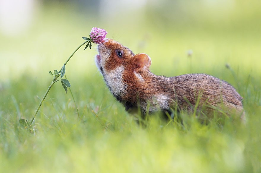 animals-smelling-flowers-08