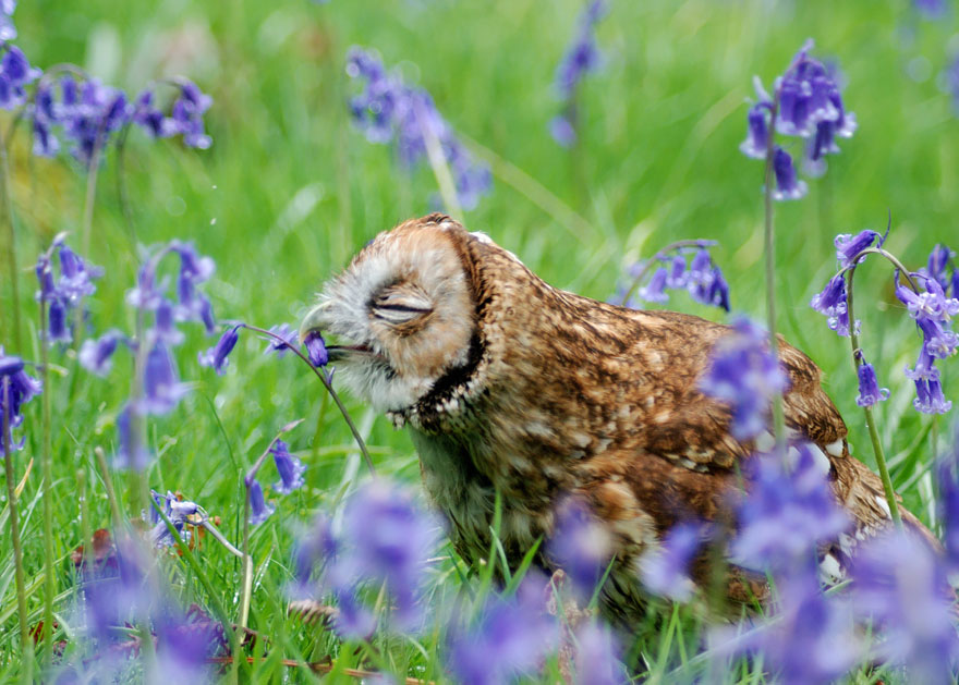 animals-smelling-flowers-09