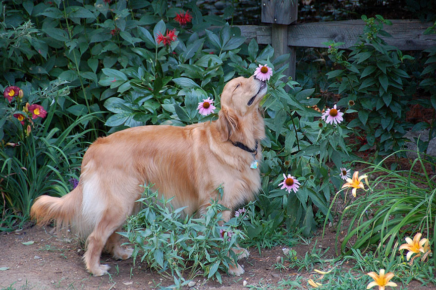 animals-smelling-flowers-10
