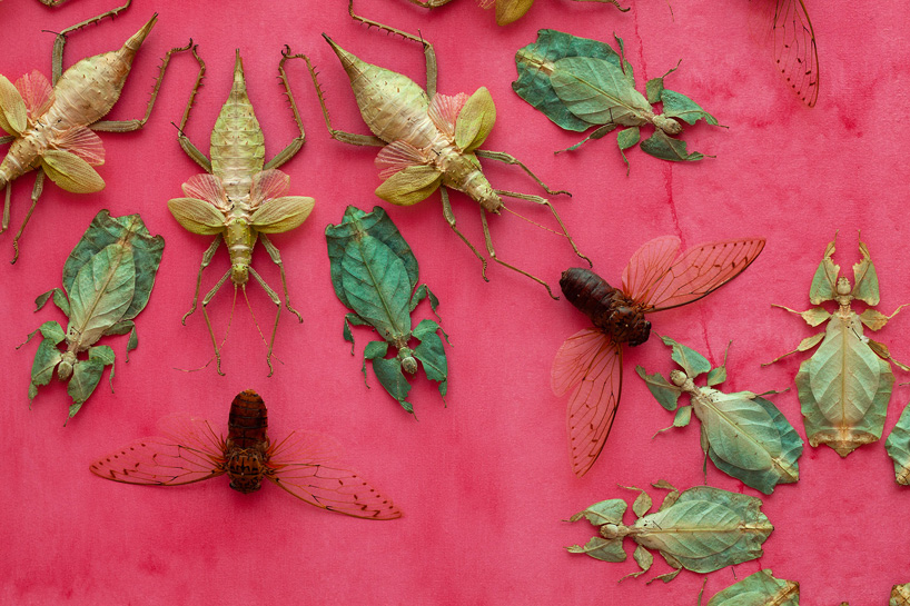 jennifer-angus-smithsonian-american-art-museum-renwick-gallery-in-the-midnight-garden-insect-wallpaper-05