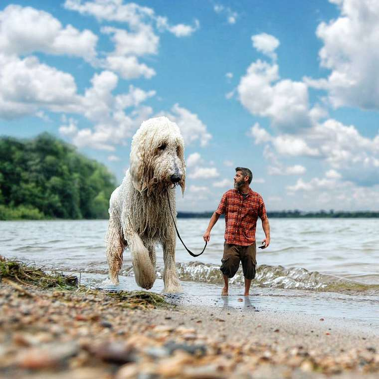 Christopher-Cline-giant-dog-juji-02