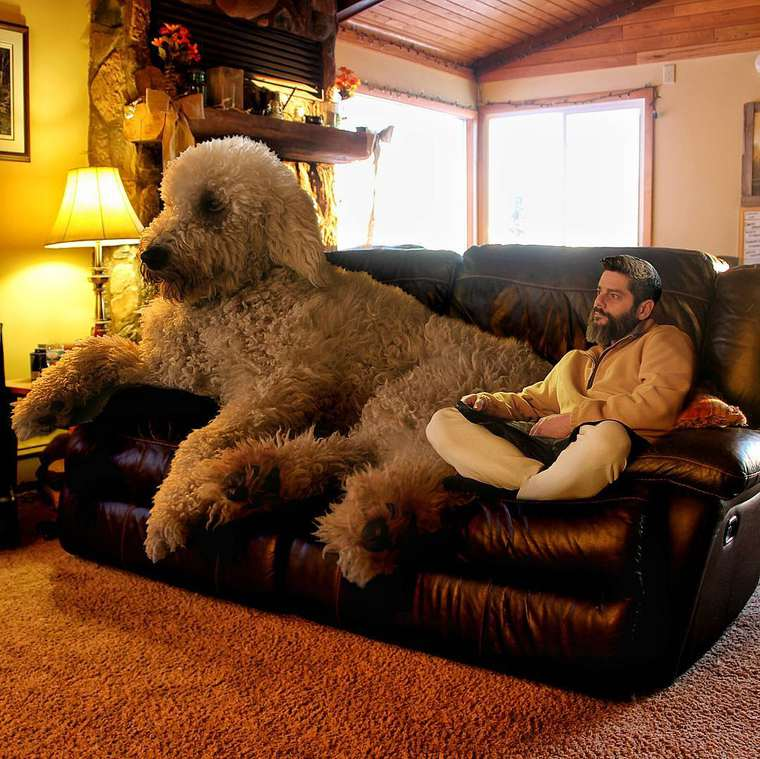 Christopher-Cline-giant-dog-juji-03