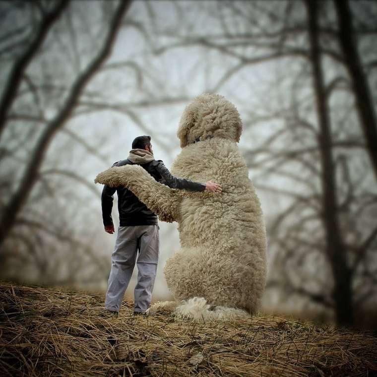 Christopher-Cline-giant-dog-juji-10