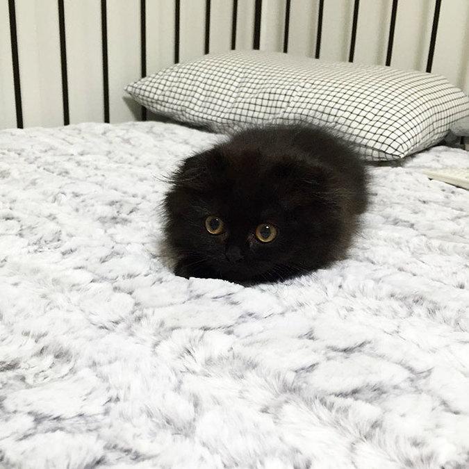 gimo-cat-eyes-03