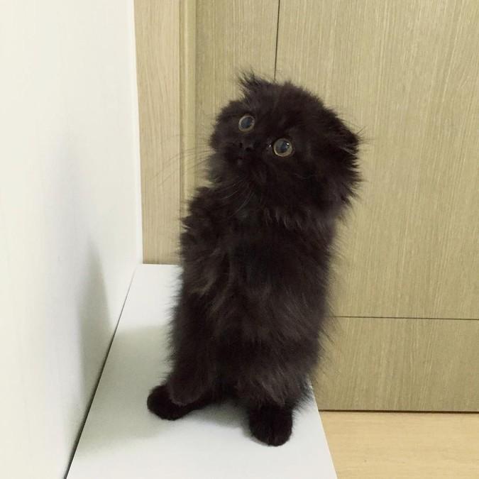 gimo-cat-eyes-04