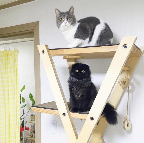 gimo-cat-eyes-06