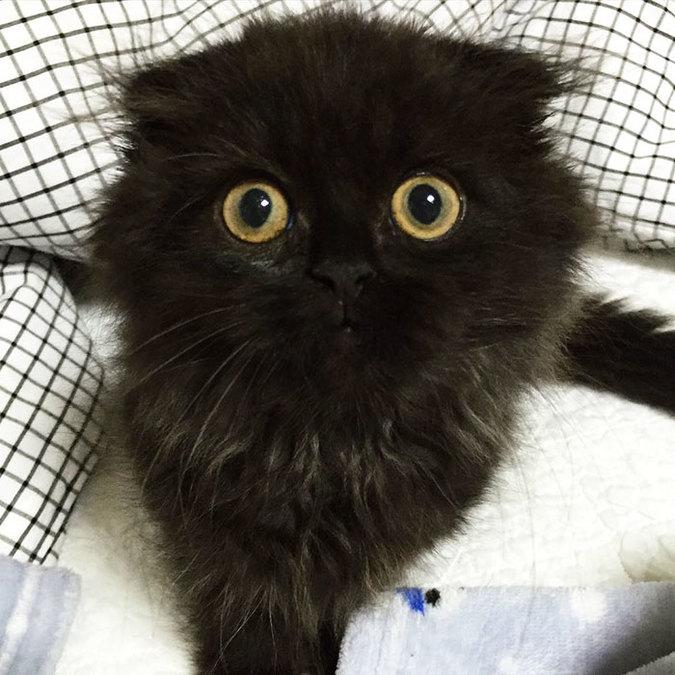 gimo-cat-eyes-11