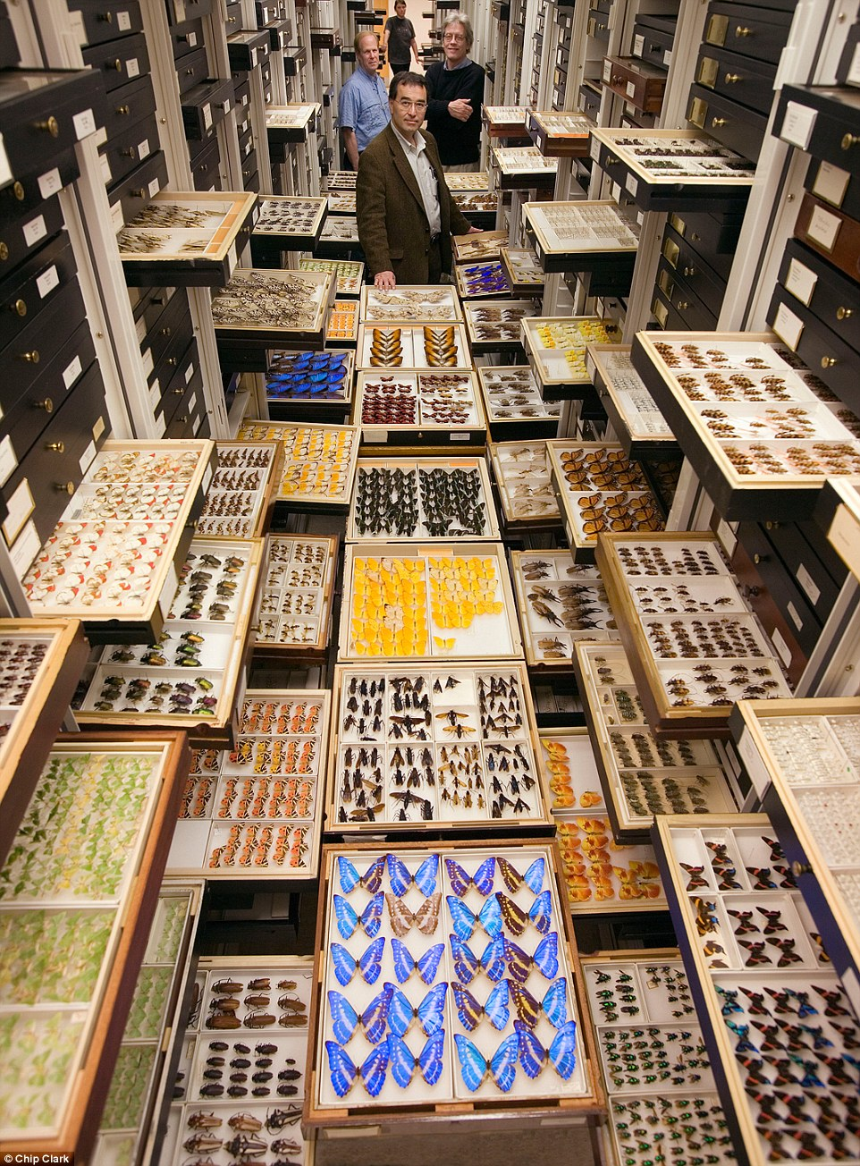 natural-history-museum-smithsonian-backroom-02