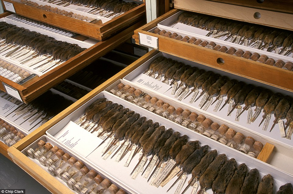 natural-history-museum-smithsonian-backroom-03
