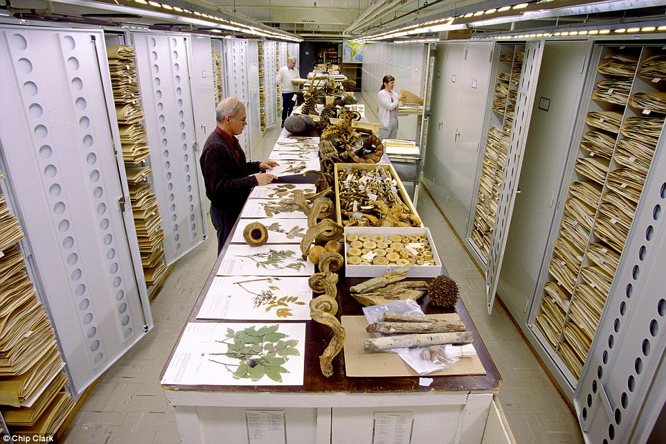 natural-history-museum-smithsonian-backroom-05.pg