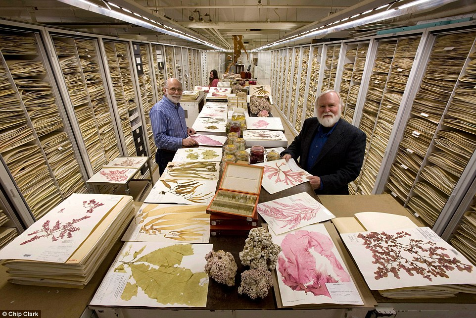natural-history-museum-smithsonian-backroom-07