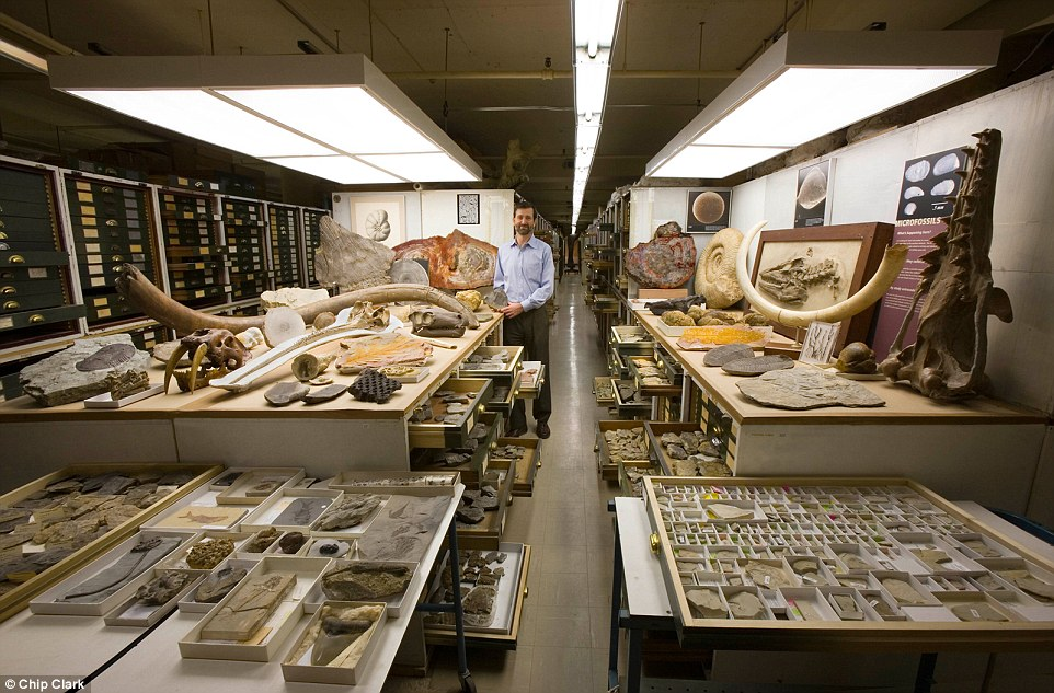 natural-history-museum-smithsonian-backroom-11