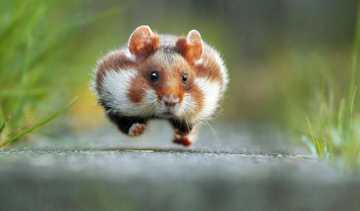 Картинки по запросу смешные картинки диких животных